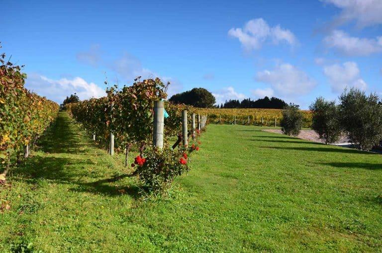 Auckland Wineries & Vineyards