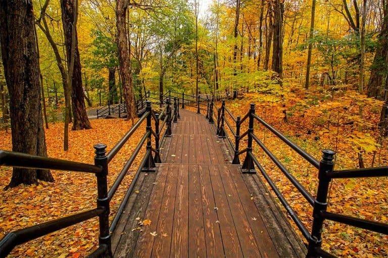Autumn Fall in Canada