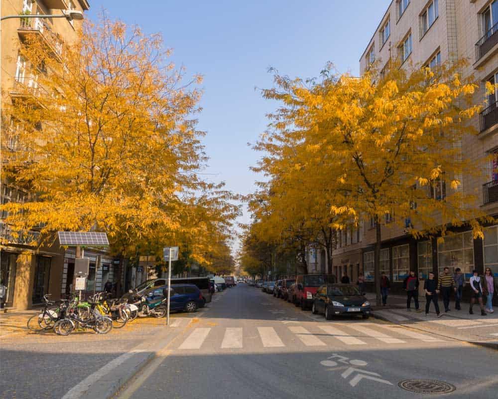 Autumn in Krizikova Street in Karlin