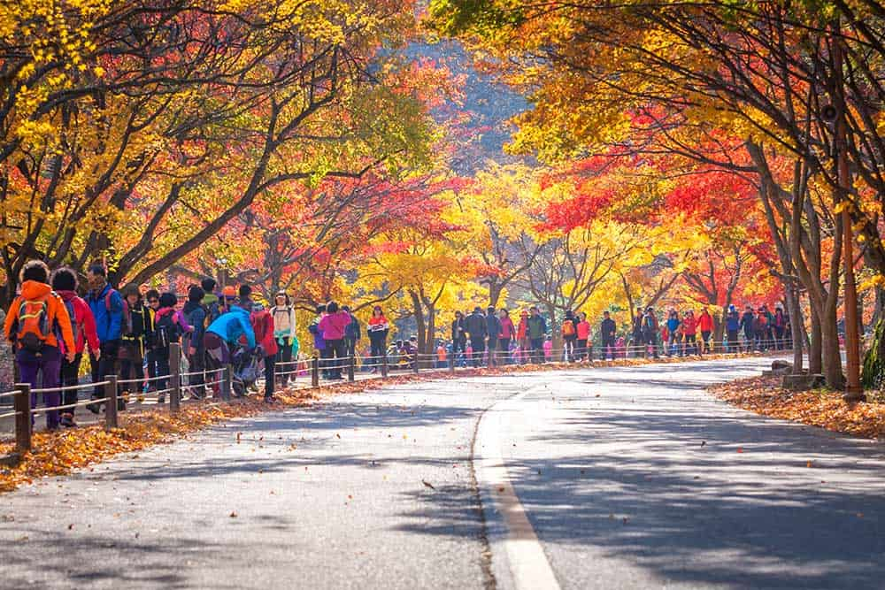 Autumn @ Naejangsan National Park