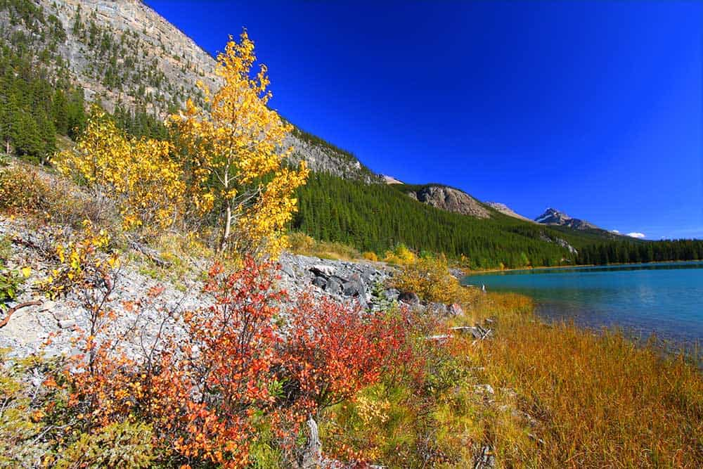 Autumn at Waterfowl Lakes