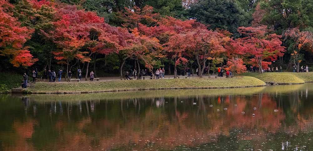 Autumn @ Yoyogi Park
