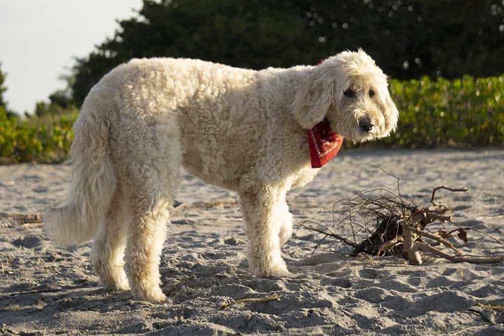 Dog in Brohard Beach Paw Park