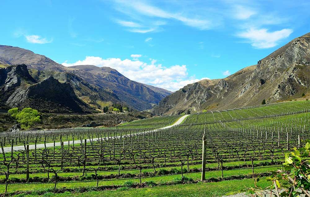 Chard Farm Winery