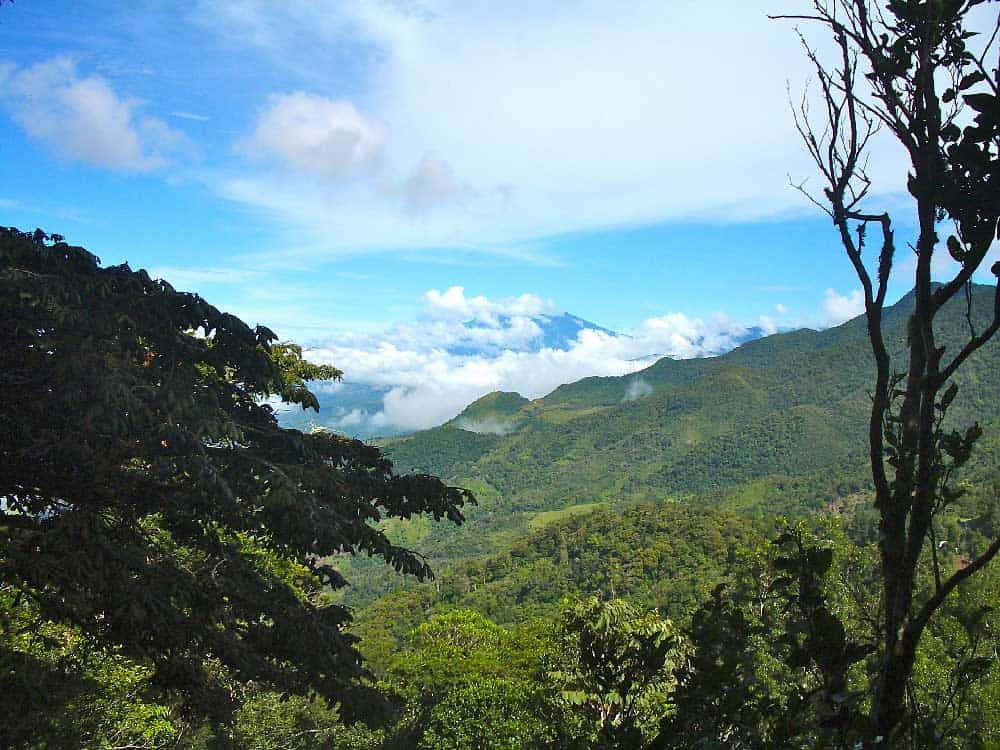 Cloud Forest in Panama