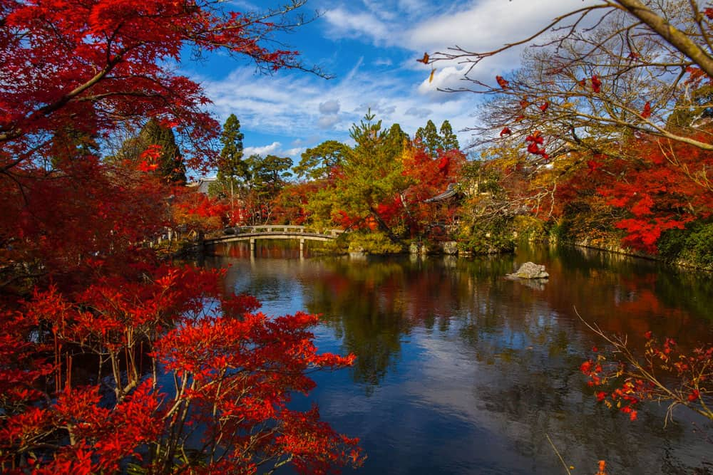 Fall Colours in Kyoto