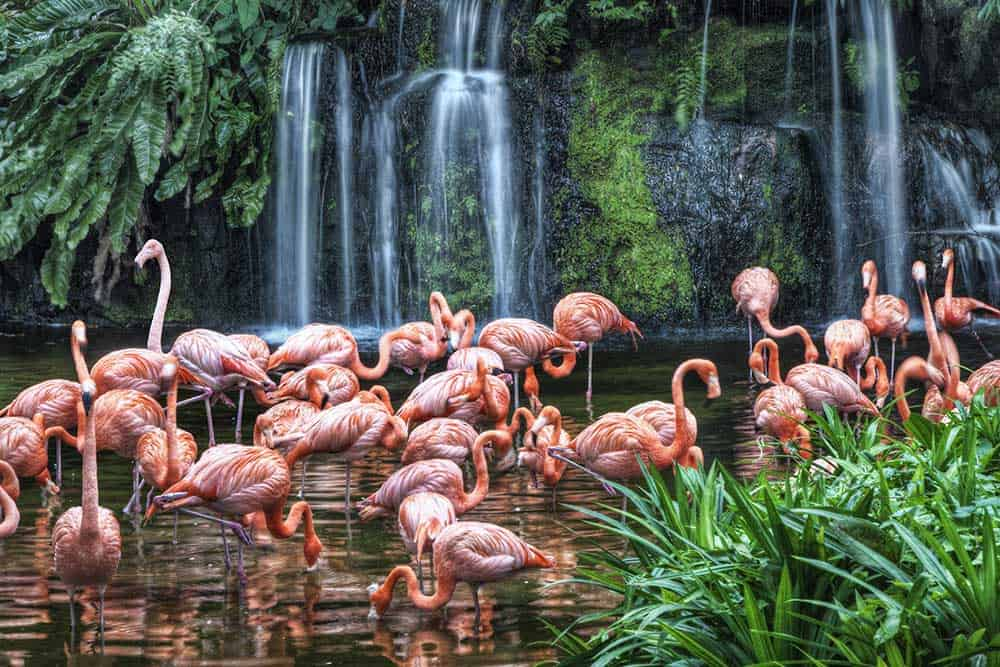 Flamingo Lake @ Jurong Bird Park