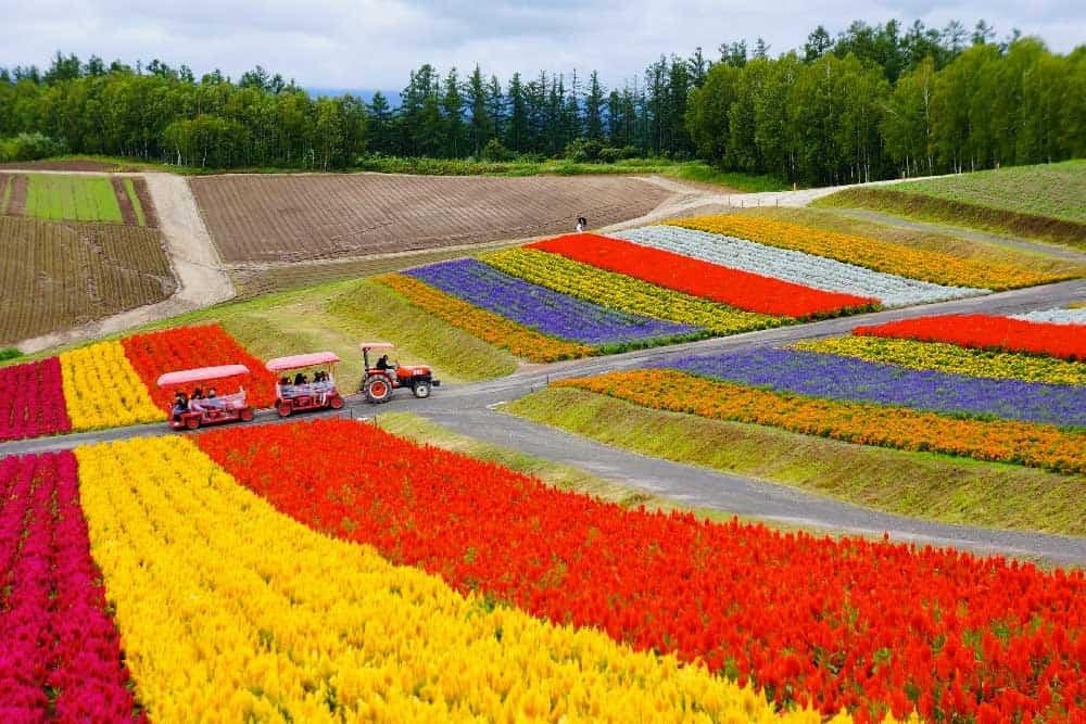 Flower Garden in Hokkaido, Japan