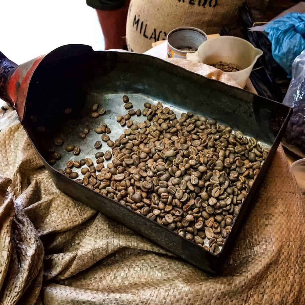 Geisha Coffee Beans Panama