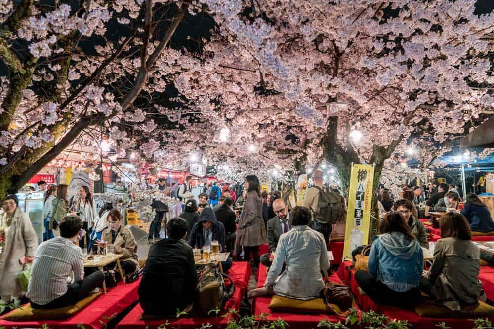 Hanami @ Maruyama Park in Kyoto