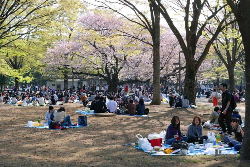 Hanami Yoyogi Park Tokyo