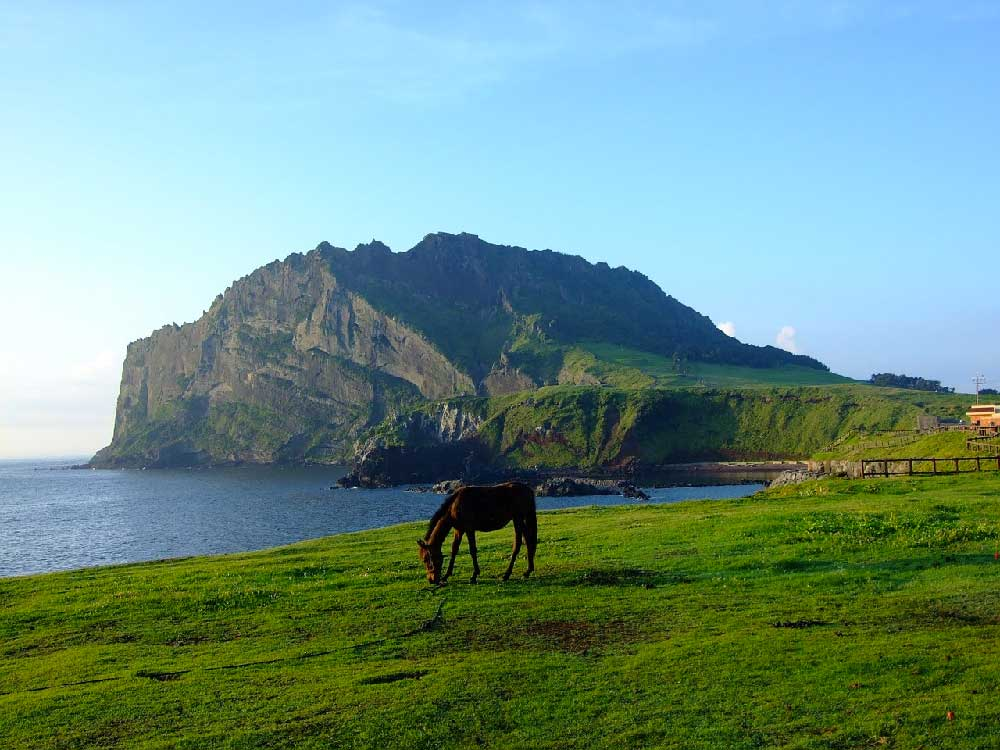 Horse on Coast in Jeju Island, Korea