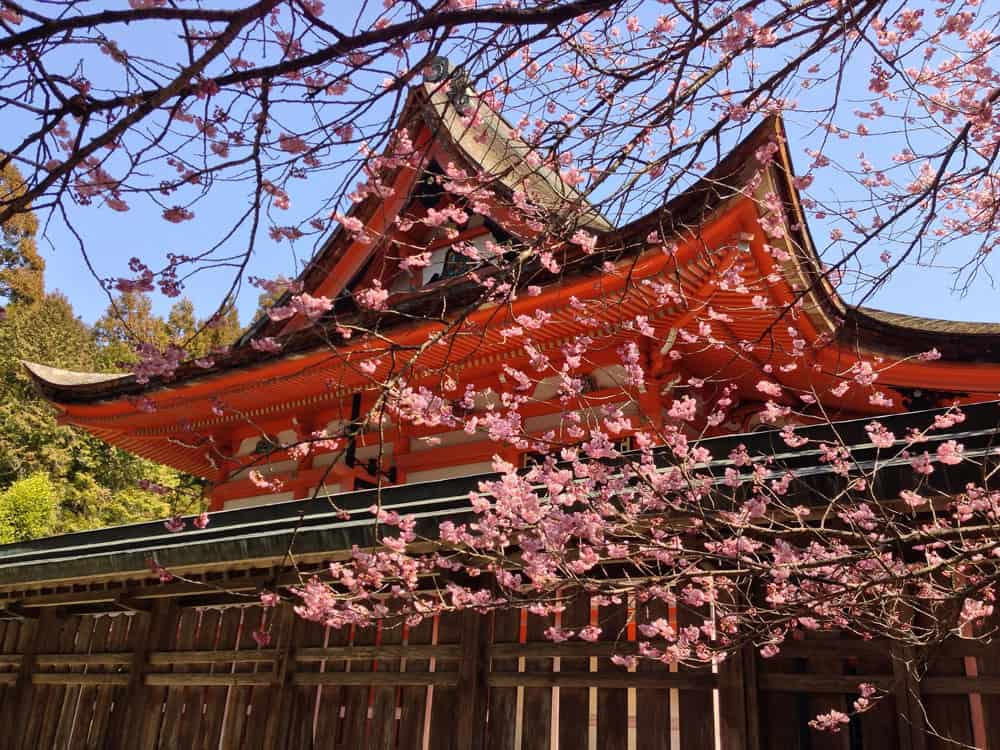 Cherry Blossoms at a Japanese Shrine