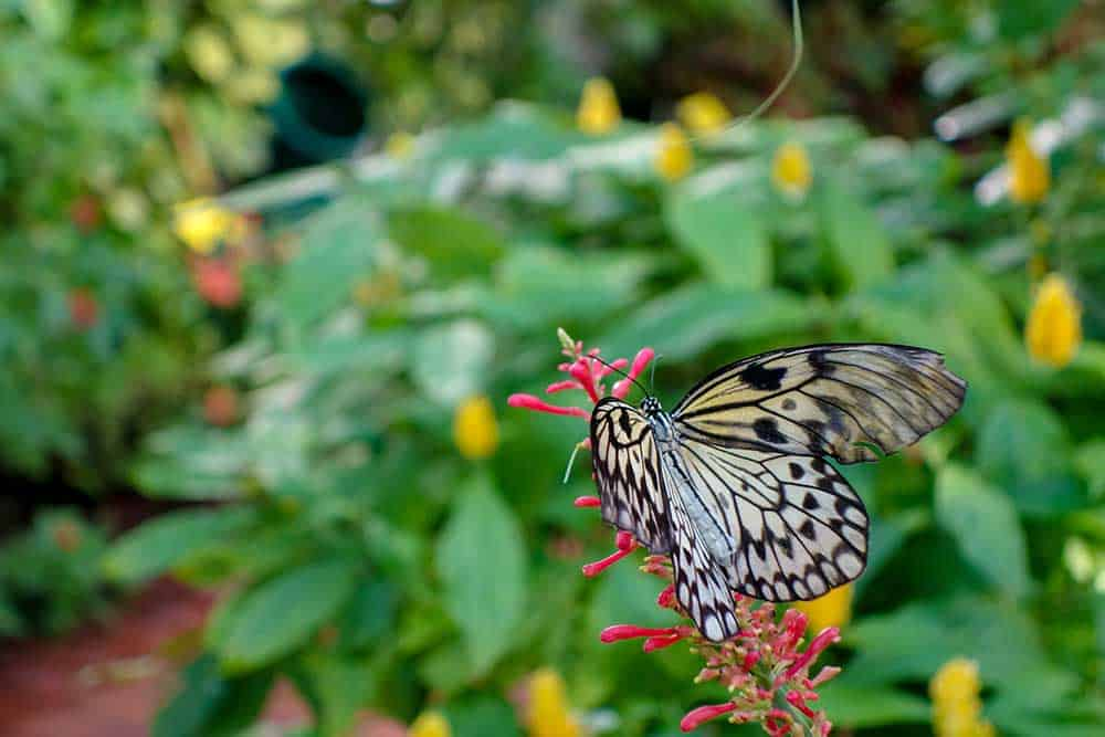 Butterfly & Nature Conservatory
