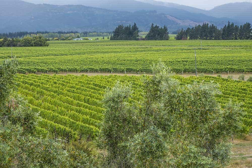 Giesen Wines