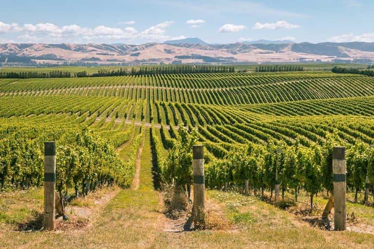 Marlborough Wineries & Vineyards