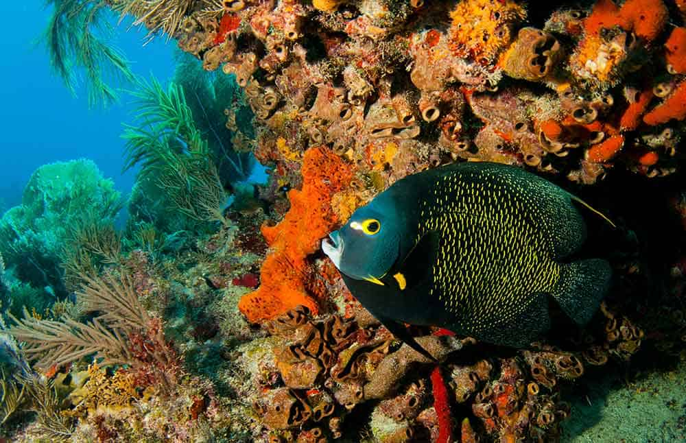 Molasses Reef Sanctuary Preservation Area