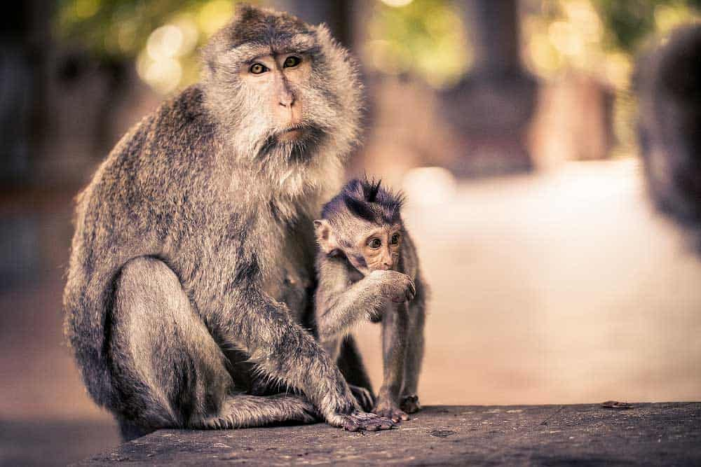 Monkey Forest in Ubud, Indonesia