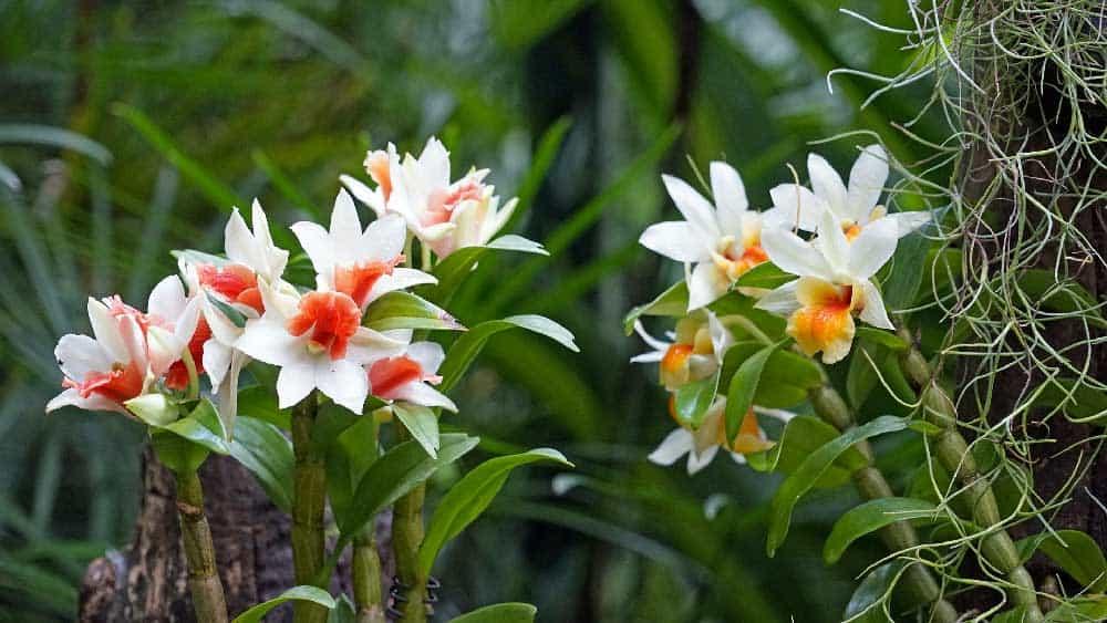Orchid @ Singapore Botanic Gardens