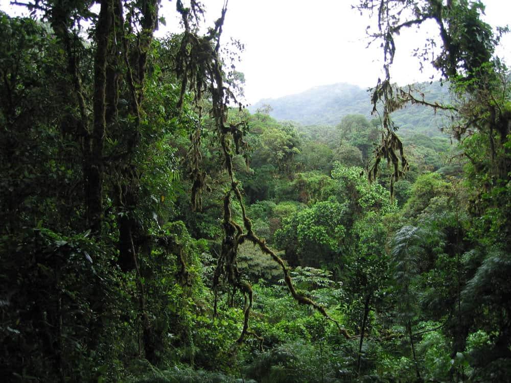 Rainforest in Monteverde, Costa Rica