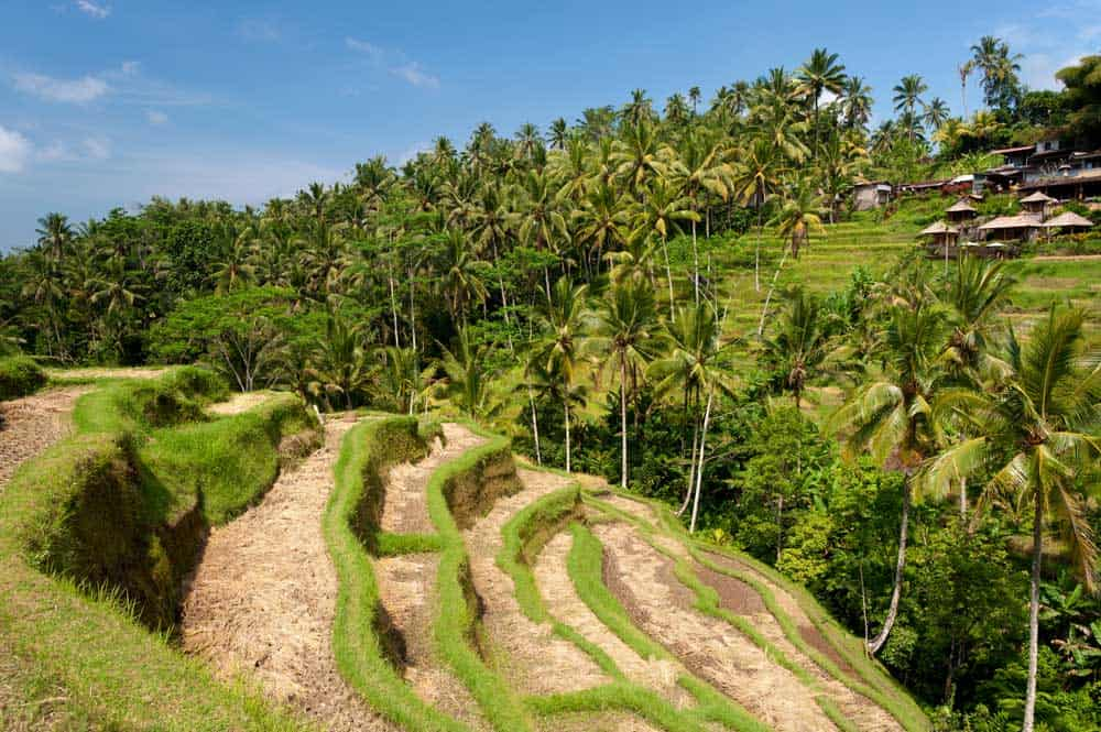 Rice Terraces in Ubud, Indonesia