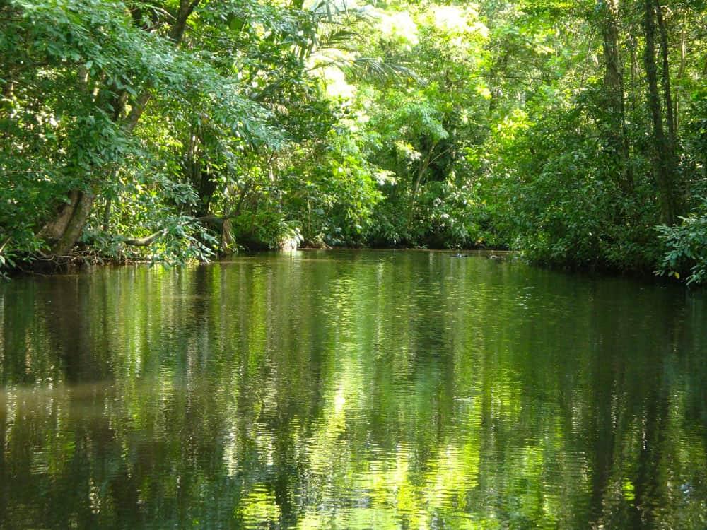 River and jungle in Tortuguero National Park, Costa Rica