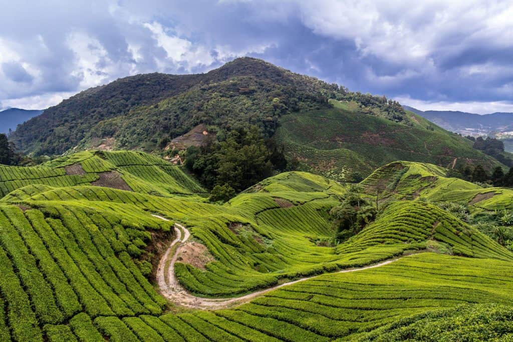 Rolling Hills of the Cameron Highlands, Malaysia
