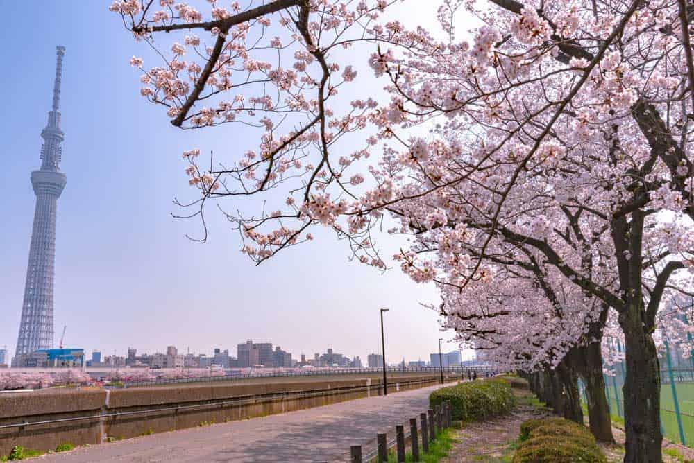 Sakura Sumida Park