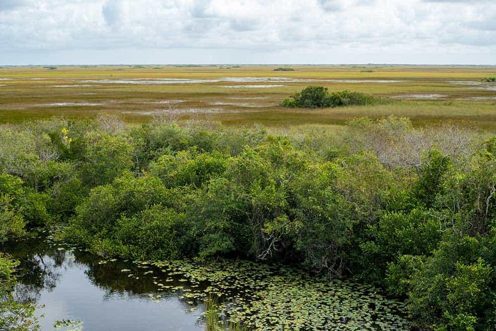 Shark Valley in Everglades National Park
