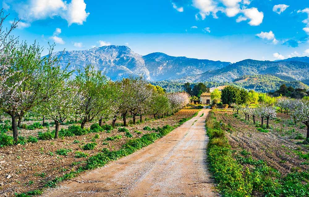 Spring in Mallorca