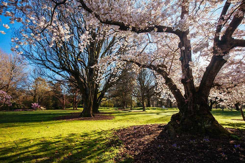 Spring River Avon Christchurch