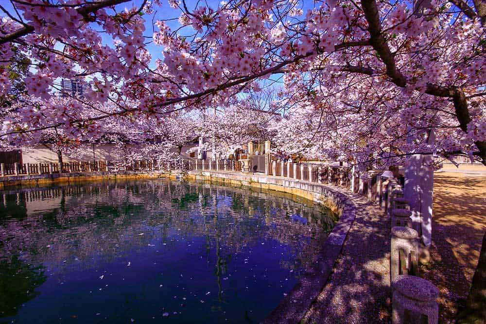 Spring at Tennoji Temple