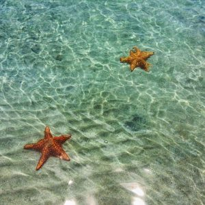 Starfish at Playa Estrella in Bocas del Toro, Panama