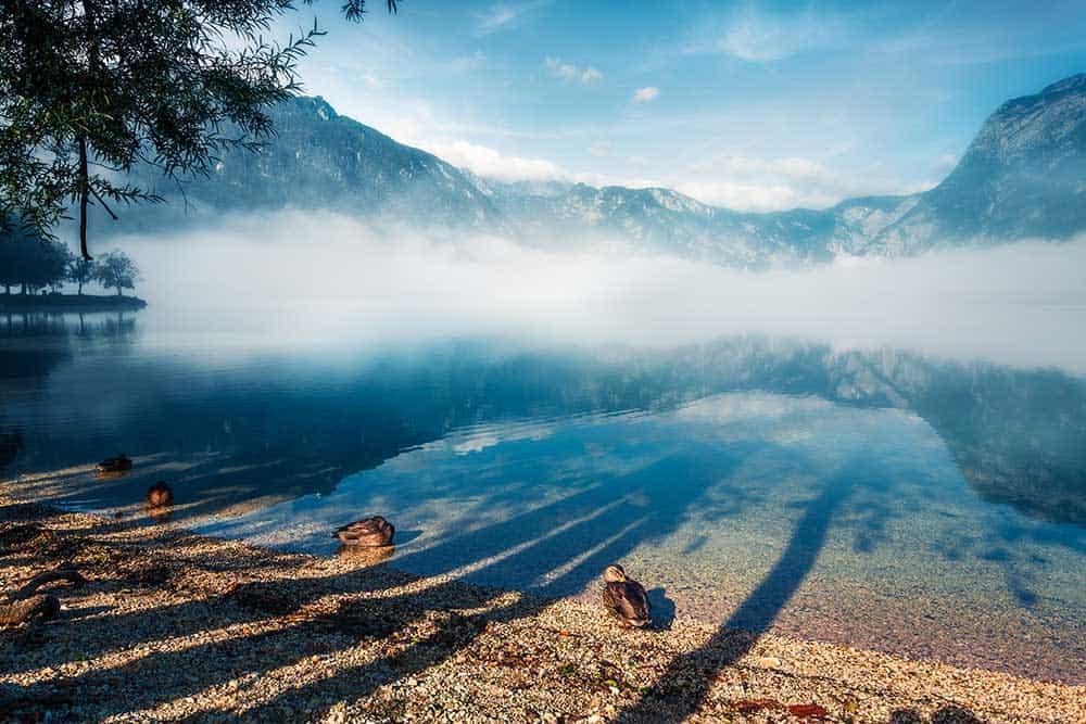 Summer Fog on Lake Bohinj