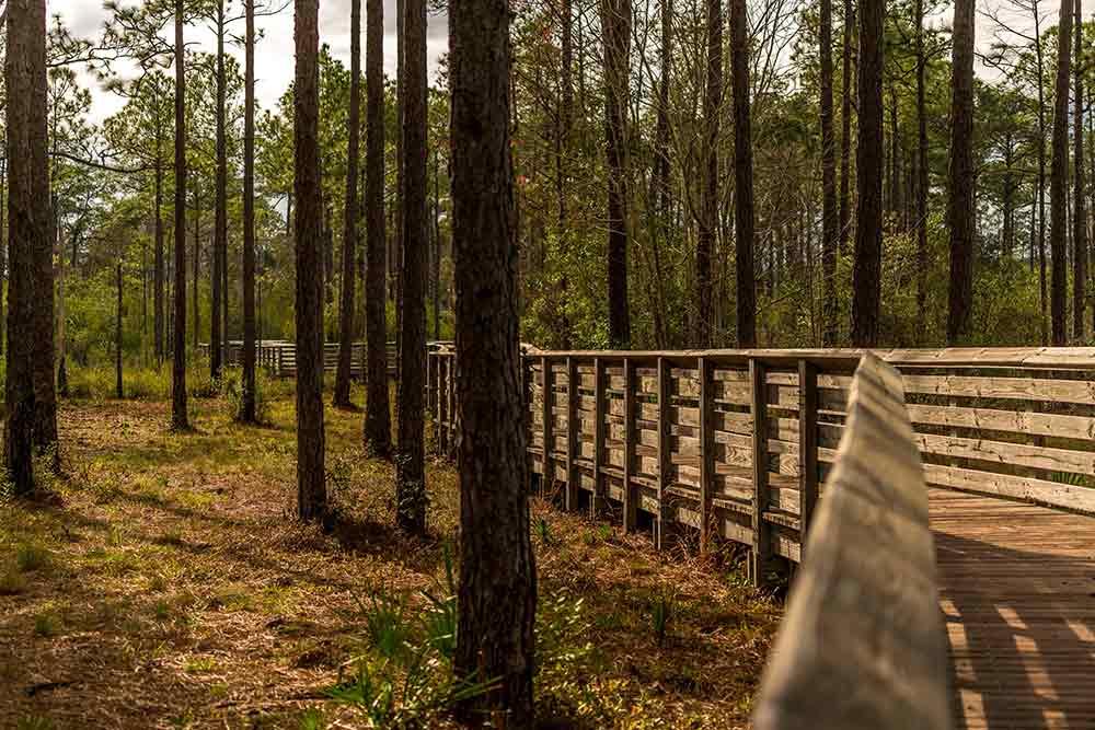 Tarkiln Bayou Preserve State Park