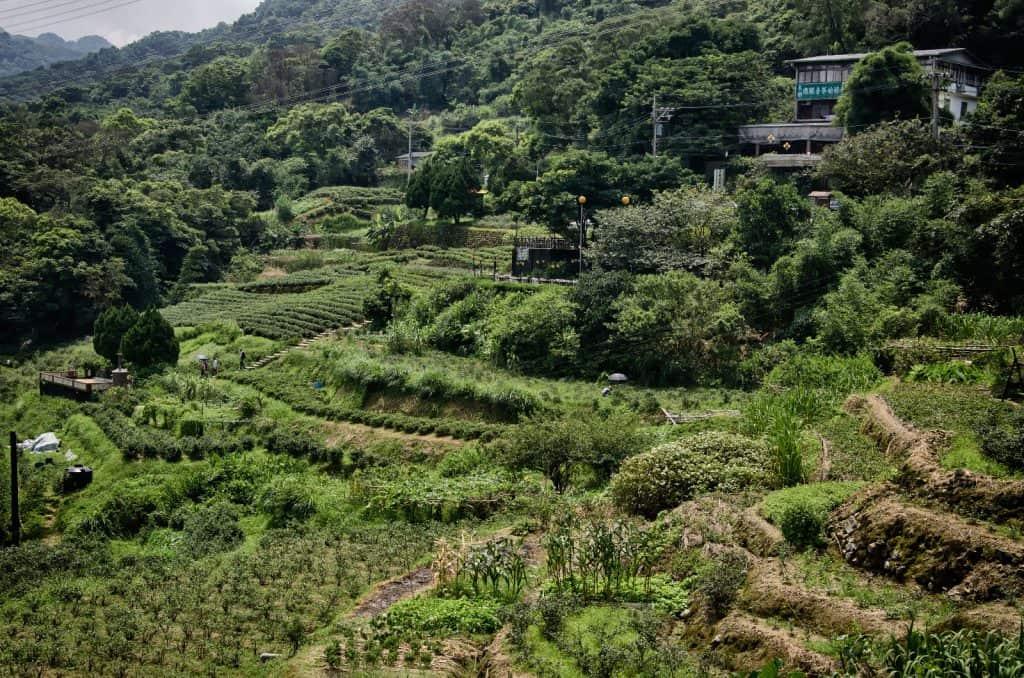Tea Fields at Maokong