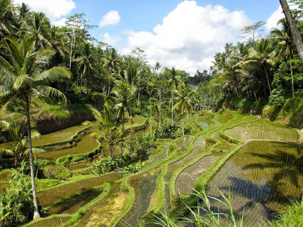 Things to Do in Ubud: Top Attractions & Places to Visit