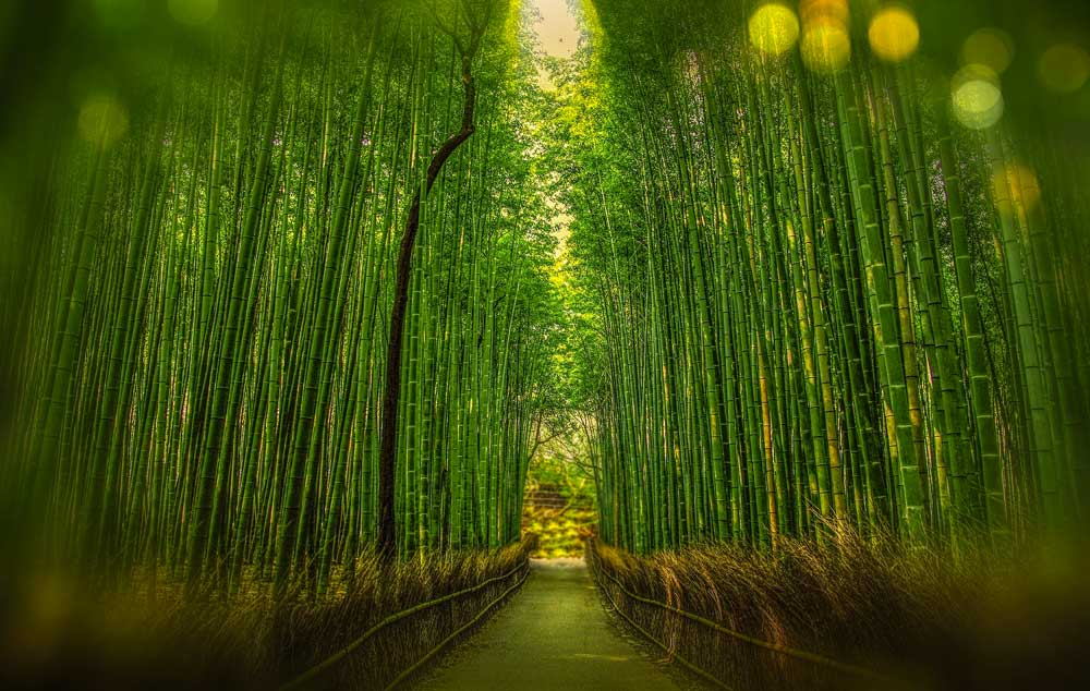 Trail at Arashiyama Bamboo Grove in Kyoto, Japan