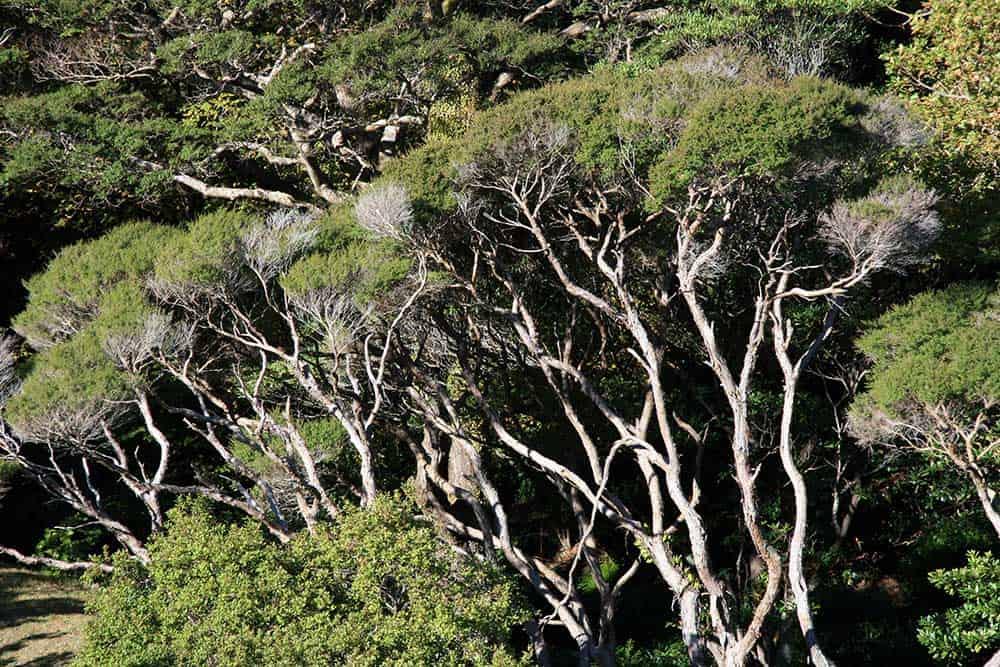 Trees @ Botanic Gardens