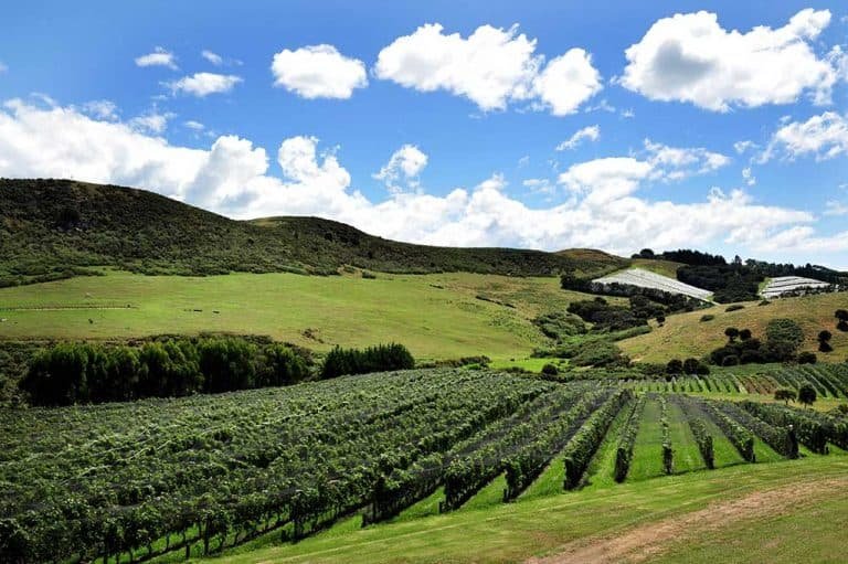 Waiheke Island Wineries & Vineyards