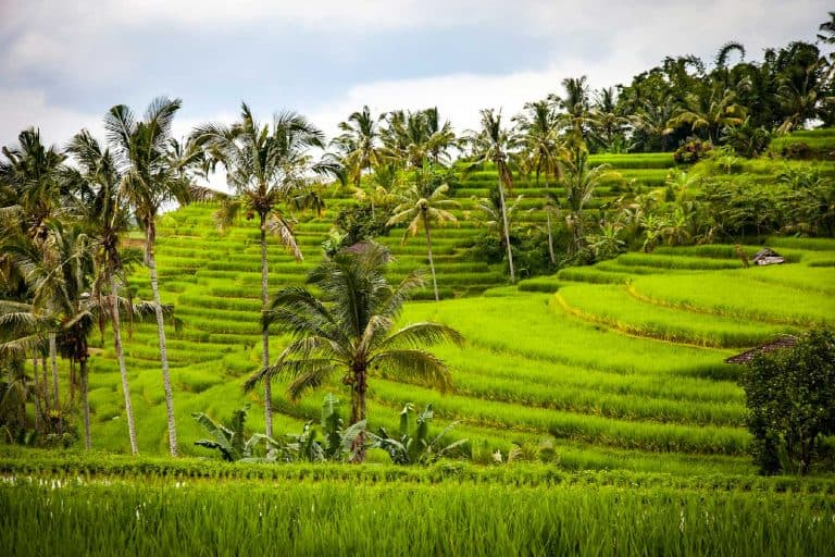 Where to Go in Bali, Indonesia